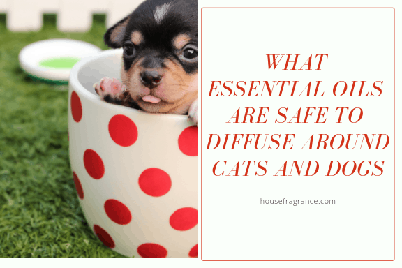 What Essential Oils Are Safe to Diffuse Around Cats and Dogs