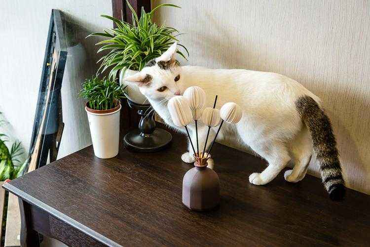 reed-diffuser-and-cat-on-table