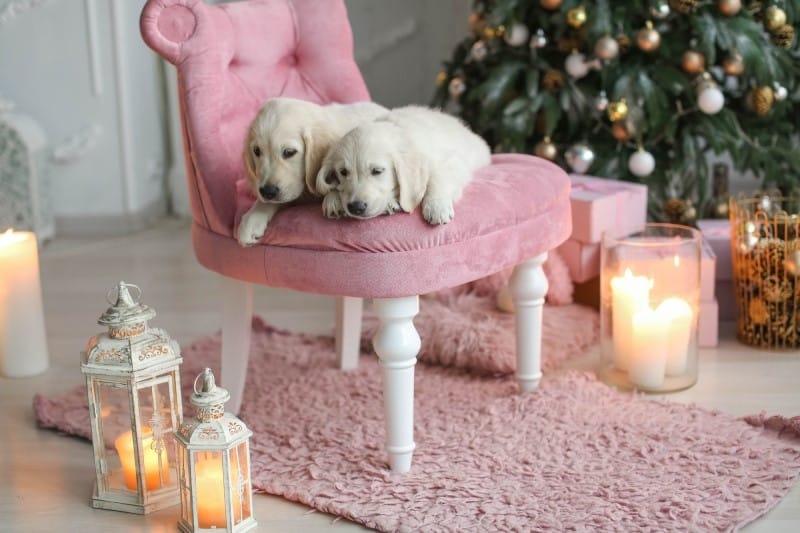 Are Candles Safe for Pets