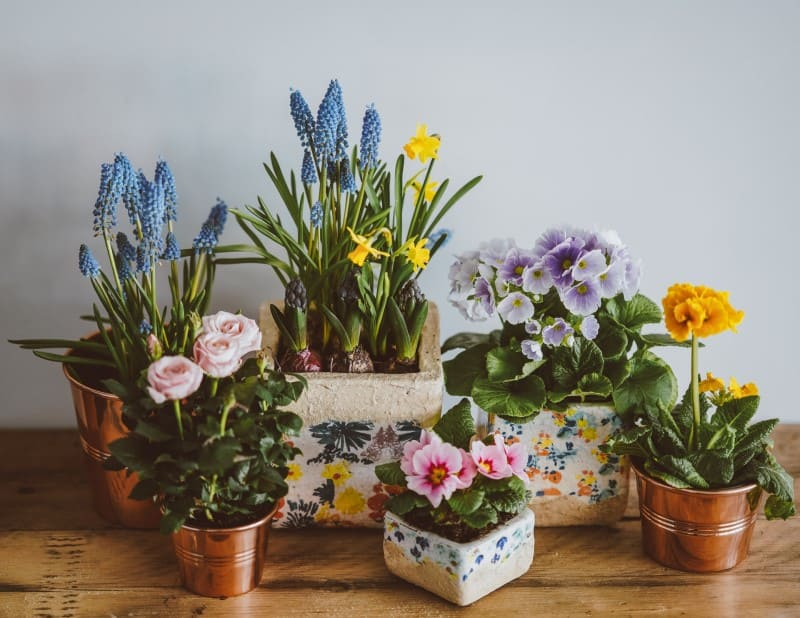 Are Essential Oil Diffusers Safe For Plants